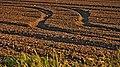 Tracks, Fields of Gan Shlomo, Shfelah , Israel קוליס, שדות קבוצת שילר, שפלת יהודה - panoramio.jpg