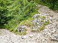 Trail, Sentiero, Wanderweg nach Navene - panoramio (1).jpg