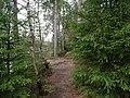 Trail at Silberteich 12.jpg