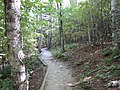 Trail in Fundy National Park.jpg