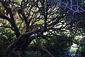 Tree (7187452790).jpg