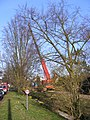 Tree Surgery in The Causeway, Peasenhall - geograph.org.uk - 1213383.jpg