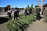 Tree giveaway spreads holiday cheer through MCAS Miramar 151202-M-HJ625-003.jpg
