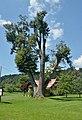 Tree in Sankt Lambrecht, Rosegg.jpg