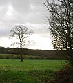 Tree in a field off Crismill Lane - geograph.org.uk - 1611818.jpg