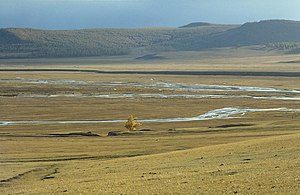 Mongolian-Manchurian grassland - Image: Tree on the Mongolian steppe (June 1997)