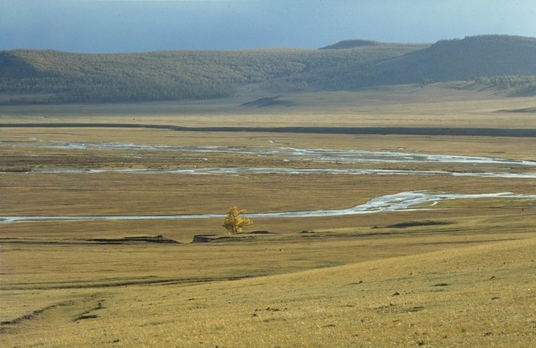Tree on the Mongolian steppe (June 1997)
