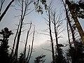 Trees - panoramio (11).jpg