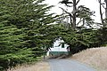 Trees at Point Reyes (TK2).JPG