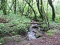 Tributary of the River Tiddy, Skelton's and Cutkive Woods - geograph.org.uk - 531534.jpg