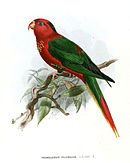 Drawing of red parrot with green wings, nape, and upper tail, with yellow flecked chest