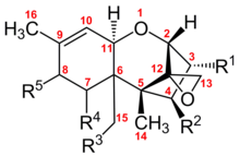 Struttura chimica dei tricoteceni