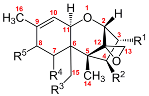 Trichothecene - Chemical structure of Trichothecenes