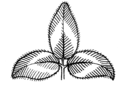 Trifoliate (PSF).png