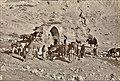 Troupeaux à la fontaine dans le désert.jpg