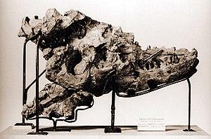 Albertosaurus - Type specimen