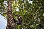 USAID Measuring Impact Conservation Enterprise Retrospective (Guatemala; Rainforest Alliance) (39407017645).jpg