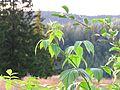 Ullared camping, växt på toppen av skidbacken - panoramio.jpg