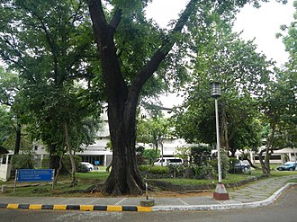 University of the Philippines School of Economics - Image: Universityofthe Philippines Schoolof Economicsjf 2859 08