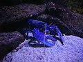 Vannes - aquarium (04).jpg