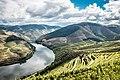 Ventozelo - Ervedosa do Douro.jpg