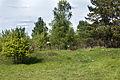 Verkhnii Saltiv Rural Cemetery (2).jpg