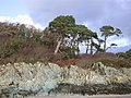 View from Garvellan Rocks inland, Fleet Bay - geograph.org.uk - 43230.jpg