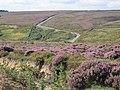 View from near High Hamer towards Hartoft Moor - geograph.org.uk - 291032.jpg