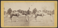 View in Central Park, from Robert N. Dennis collection of stereoscopic views 9.png