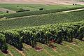 Vignoble Champagne Cl j Weber04 (23309695379).jpg