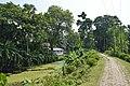 Village Scene - Rupnarayan Embankment Road - Mellock - Howrah 2014-10-19 9870.JPG