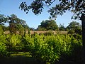 Vineyard at Whitworth Hall Country Park.JPG