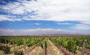 Vineyard near Los Árboles in Uco Valley, Mendo...