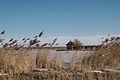 Vogelkijkhut bij de Ezumakeeg 3.jpg