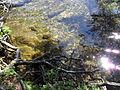 Vylet k Cernemu jezeru Sumava - 9.srpna 2010 152.JPG
