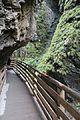 Walkway through a ravine (24294701433).jpg