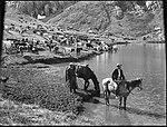 Watering stock, Kosciusko (2362697687).jpg