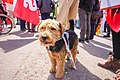 Welsh independence march Cardiff May 11 2019 6.jpg