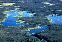 Wetlands and Spruce Forest Koyukuk NWR.jpg