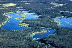 240px-Wetlands_and_Spruce_Forest_Koyukuk_NWR