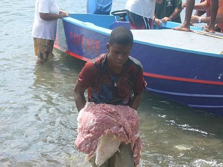 Boy in Bequia in the Grenadines carrying meat of a humpback whale (2007) Whalemeat.jpg