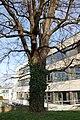 Wiener Naturdenkmal 68 - Baumhasel (Döbling) g.JPG
