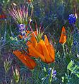 Wild Bouquet (16539988627).jpg