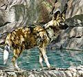 Wild Dog, Living Desert 3-15 (16764818282).jpg