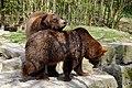 Wildpark Bad Mergentheim. Braunbären.jpg