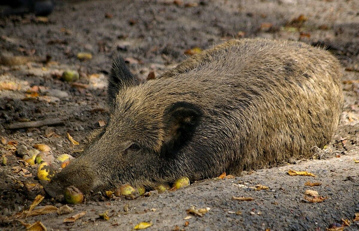 Is The Boars Head Nantwich Dog Friendly