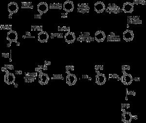 Tropinone - Image: Willstatter tropinone synthesis