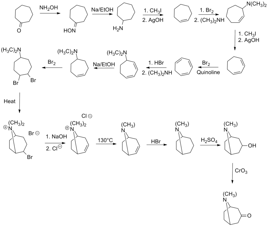 Willstatter tropinone synthesis.png