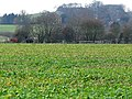 Winter Crop - geograph.org.uk - 94499.jpg