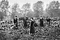 Women at work during the First World War Q108033.jpg